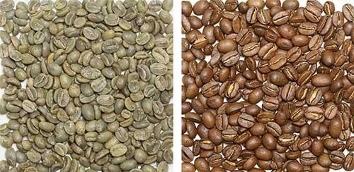 コロンビア豆の画像